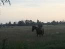 bogosawiestwo-wody-borzychy-24-06-2012-062